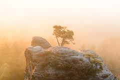 The golden Pine (derliebewolf) Tags: morning winter light mist tree nature fog sunrise de landscape deutschland landscapes haze magic herbst natur foggy sachsen landschaft wald sonnenaufgang goldenhour sächsischeschweiz d600 saxonswitzerland 2485mmf3545g gamrig porschdorf