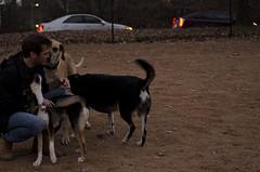 347/366 (moke076) Tags: 2016 365 366 project366 project 365project project365 oneaday photoaday dog park freedom atlanta georgia random guy man petting whisperer pets animals great dane mutts moose candid portrait nikon d7000