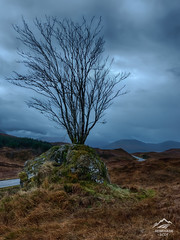 Lone Tree On Way To Glencoe - Scotland (Renegade Scot) Tags: scotland autumn beautiful bleak blue branches buachaille calm cloud clouds cloudy cold dramatic glencoe highland highlands hiking hills image isolated landscape lone lonetree lonely misty moor mor mountain mountains natural nature outdoor outdoors peaceful photo photography picturesque rannoch rannochmoor remote road scenery scenic scottish scottishhighlands scottishlandscape scottishlandscapes scottishscenery sky stillness tree uk view wild wilderness