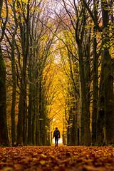 Autumn colours (semgeerts) Tags: hooge vuursche hilversum autumn colours colors herfst kleuren herfstkleuren dog walking