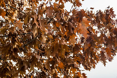02 (AdrianSanzBer) Tags: nature naturaleza madrid parque otoño autumn hojas leaves trees