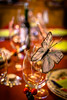 Party time!!! (Jean Latteur) Tags: bokeh focus party colours ligth table d3300 35mm f18 butterfly nikon