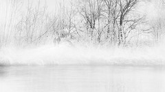 ...twolostinwhite... (*ines_maria) Tags: winter fog couple river carinthia outside blackandwhite bw panasonicdmcgx8 light hoarfrost foggy monochrome mono nebel raureif kärnten