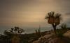 A Surreal Scene (--Welby--) Tags: surreal scene sunset perth hills canon 40d 1585 bush australia western rocks balga black boy grasstree