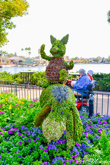 Piglet and Eeyore (disneylori) Tags: piglet eeyore winniethepooh topiary flowerandgardenfestival unitedkingdom worldshowcase epcot waltdisneyworld disneyworld wdw disney
