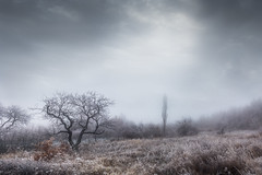 Hillside (RobertFenyo) Tags: winter tree trees cold sky ice landscape