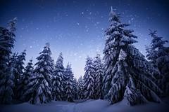 winter dream (martin amm) Tags: winter ochsenkopf nature landscape sky stars night cold snow frost franken fichtelgebirge nacht sternenhimmel franconia trees forest photography nikon tsmron naturfranken