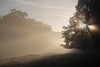 England (richard.mcmanus.) Tags: mist gettyimages mcmanus landscape sunbeam trees dawn richmondpark london england