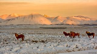 Memories of Iceland (3)