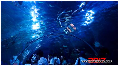 品川水族館41.jpg