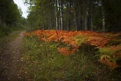 (aburlakov) Tags: road trees fern forest