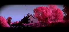 Lydd station (dogtemple) Tags: cinema traintracks trainstation dungeness pylons cinematic aero anamorphic digitalinfrared cinemascope filmlook fullspectrum aerochrome infraredcolourfilm