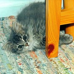 00367 (d_fust) Tags: cat kitten gato katze  macska gatto fust kedi  anak katt gatito kissa ktzchen gattino kucing   katje     yavrusu