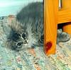 00367 (d_fust) Tags: cat kitten gato katze 猫 macska gatto fust kedi 貓 anak katt gatito kissa kätzchen gattino kucing 小貓 고양이 katje кот γάτα γατάκι แมว yavrusu 仔猫 का बिल्ली बच्चा