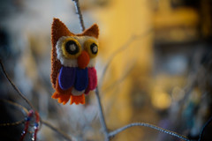 Little Owl (cnbybl) Tags: 35mm sony owl 35 bozcaada a6000 sel35
