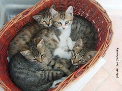 4 gattini   4 kittens (Leo Fulviosky) Tags: 4 kittens gattini
