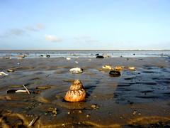 Low tide (Jaedde & Sis) Tags: beach sand dof ground clams conch blåvandshuk 15challengeswinner challengefactorywinner thechallengefactory herowinner