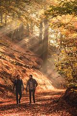Rays (Wave / Particle / Pixel) Tags: autumn sunlight fall netherlands colors leaves forest herfst nederland arboretum location wageningen holanda rays magical paysbas wageningseberg provinciegelderland