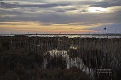 PAISAJES DE ALMERÍA (serafuentes) Tags: naturaleza atardecer el punta almería roquetas albufera ejido charcas entinassabinar