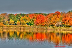 Fall colors and reflections (Anton Shomali - Thank you for over 700K views) Tags: blue autumn red chicago color colour green fall water colors yellow reflections colours co itasca coth coth5 fallcolorsandreflections
