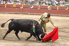 Natural de Morante en Lima (Vladimir Tern A.) Tags: peru gente lima bulls toros costumbres acho bullfighting bullfighters tauromaquia tradiciones toreros matadores corridasdetoros taurinos plazasdetoros feriataurina culturayarte