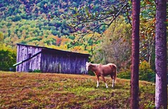 Valley Horse  Oct 2015 (51) (wildrosetn39) Tags: autumn horse tennessee r local townsend dryvalley