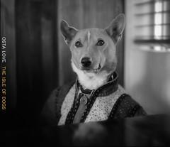 THE ISLE OF DOGS (TommyOshima) Tags: music dog simon artwork album cd jacket basenji marcjacobs theisleofdogs ostalove