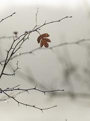 Dénuement **---+°-°-° (Titole) Tags: feuille leaf branche titole nicolefaton crataegus aubépine hawthorn explored friendlychallenges 15challengeswinner challengegamewinner thechallengefactory challengeyouwinner cyunanimous