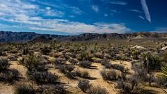 Joshua Tree National Park Malapai Hill (Kent Freeman) Tags: california park tree ed dc pentax joshua hill national imaging smc ricoh wr k3 alif f3556 18135mm pentaxda malapai
