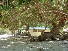 Big Shade on Beach (mikecogh) Tags: vanuatu portvila tree large shade beach house peaceful