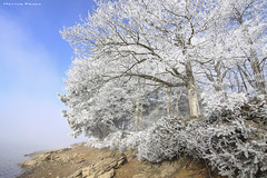 Winter morning (Hector Prada) Tags: invierno hielo niebla luz pantano paisaje winter ice fog mist light nature landscape cencellada