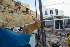 cat202, citizen of Malta