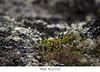#238 (Les photographies de Marina) Tags: nature hauteloire hautallier myhauteloire myauvergne macrophotographie