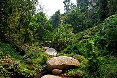 Lamnamkok National Park (BugsAlive) Tags: chiangrai lamnamkoknp pongprabat thailand habitat stream forest outdoor nature wildlife landscape
