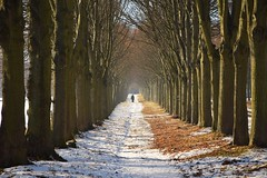 Avenue to Paris (JoannaRB2009) Tags: path road tree trees alley avenue lindenalley snow winter cold light shadow sunny nature wilhelmsthal calden hesse hessen nordhessen deutschland germany landscape view