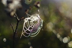 morning sun (ΞSSΞ®®Ξ) Tags: ξssξ®®ξ pentax k5 lazio italy perspective depthoffield spider web smcpentaxm50mmf17 bokeh outdoor abstract