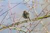 Robin     Rotkehlchen (Natural Photography by CJH) Tags: rotkehlchen robin redbreast robinredbreast tree twig rest sit bird vogel natural wildlife nature wild nikon d500 nikond500 telephoto vögel 300mm pf f4 300mmf4 300f4 nikkor pfedvr tc14eiii luxembourg