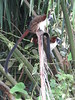 IMG_9074 (dstylebda) Tags: colonpanama gatunlake tamarins howlermonkeys sloth