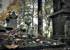 Cimetière de Bruges_2496 (Sleeping Spirit) Tags: cimetière bruges cemetary cemetaries