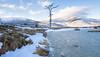 Cairngorms - Lone Tree. (grahamwilliamson1985) Tags: breathtakinglandscapes frozenwater frozenlake tree winter snow lonetree lightningtree cairngorms mountains scotlandsmountains scotland bluesky munro travel