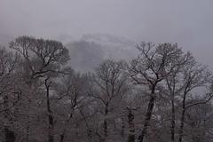 le Chavalard dans le brouillard... (bulbocode909) Tags: valais suisse fully chavalard châtaigneraies châtaigniers arbres nature montagnes hiver neige brouillard
