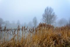 Beukenpark-29-1 (stevefge) Tags: beuningen mist nederland netherlands park gelderland water winter reed trees reflectyourworld nature nl natuur nederlandvandaag landscape