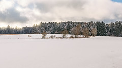 A winter magic moment (FocusPocus Photography) Tags: winter schnee snow reh doe landschaft landscape schwarzwald blackforest schömberg