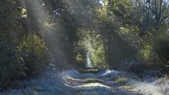 Brume et givre (Titole) Tags: path sunlight frost chemin titole nicolefaton sunrays vanishingpoint
