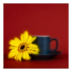 Gerbera (Stan Farrow Photography) Tags: gerbera cup saucer flower yellow red blue coffee