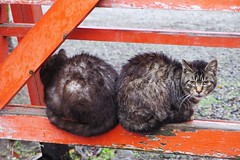 Today's Cat@2017-03-21 (masatsu) Tags: cat thebiggestgroupwithonlycats catspotting pentax mx1