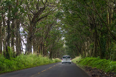 Driving in Kauai, Hawaii, USA (takasphoto.com) Tags: 80400mmf4556dvr afvrzoomnikkor80400mmf4556ded auto automobile bosque car color d610 drive driving forest forêt fullframe green greenplants kingdomplantae lens nature nikkor nikkor80400mm nikkor80400mmf4556dafvred nikkorlens nikon nikond610 outdoor plantae road supertelephoto telephoto transport transportation travel travelphotography tree trees trip vehicle verde viaje wald みどり ドライブ ニコン ニッコール 交通 旅行 木 森 森林 植物 樹林 汽車 汽车 緑 緑色 翠 自動車 自然 車 자동차