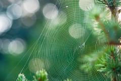 Web (Matt H. Imaging) Tags: ©matthimaging bokeh cobweb sony slt slta55v a55 minolta minoltaaf100mmf28macro minolta100f28macro
