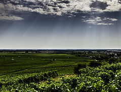 Light Rays and Grape Vines in Burgundy (Jon Meyer Photographic Art) Tags: france clouds europe burgundy vineyards fields lightrays grapevines jonmeyer jonmeyerphotography jonmeyerphotographicart hasselbladh5d50c