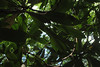 leaves (Molly Des Jardin) Tags: park blue trees light sky usa sun green leaves closeup forest state bright pennsylvania sunny 2014 susquehannock drumore 43215mm